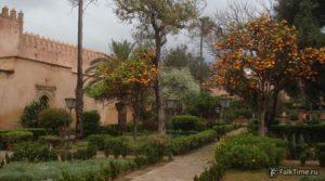 Деревья с апельсинами