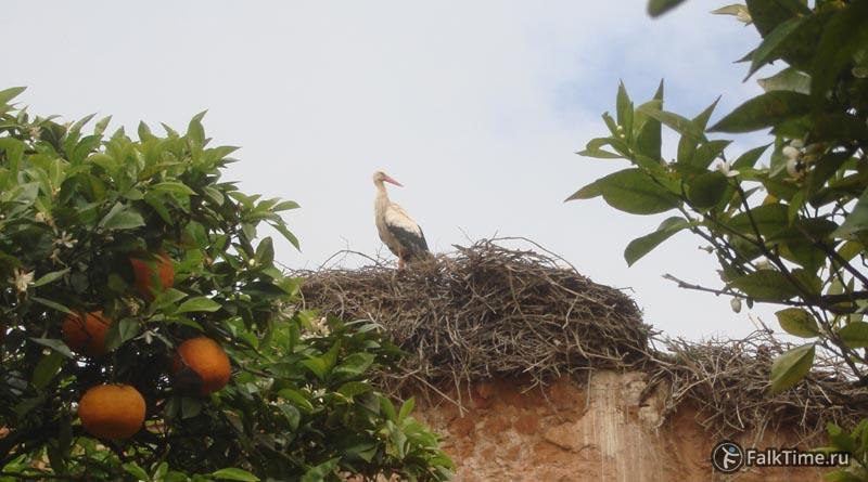 Аист в гнезде
