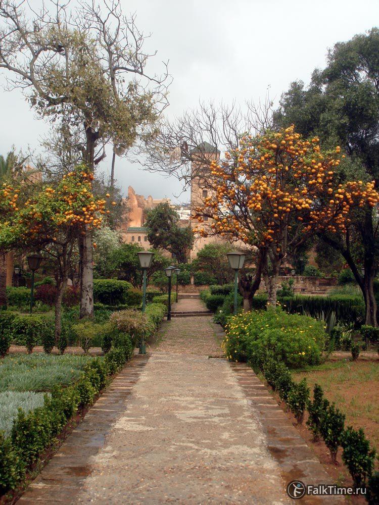Апельсины в Андалузском саду