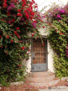 Таинственная дверь в зарослях бугенвилеи