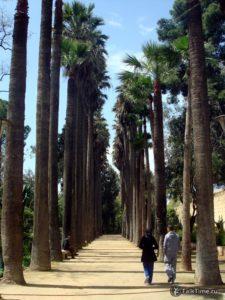 Аллея с вековыми пальмами