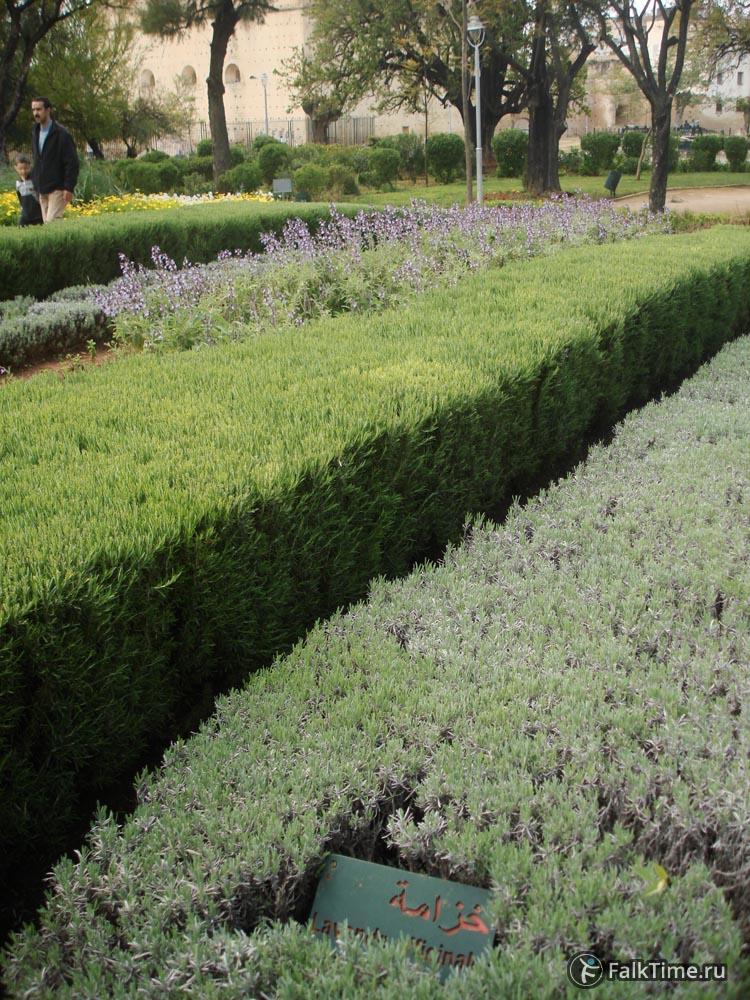 Пряные травы: лаванда, розмарин и др.