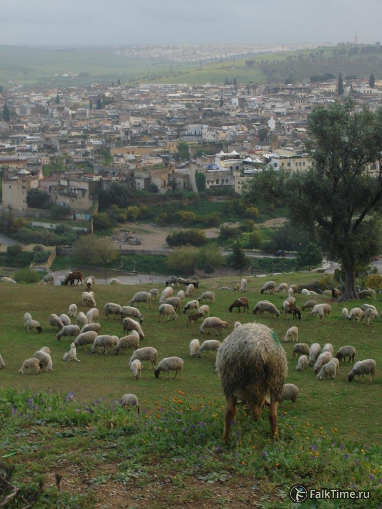 Вид на старый город, овцы