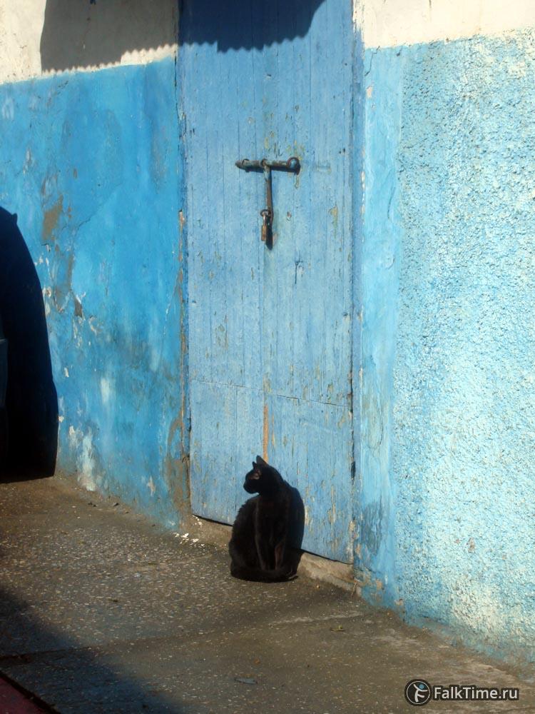 Кот у дверей