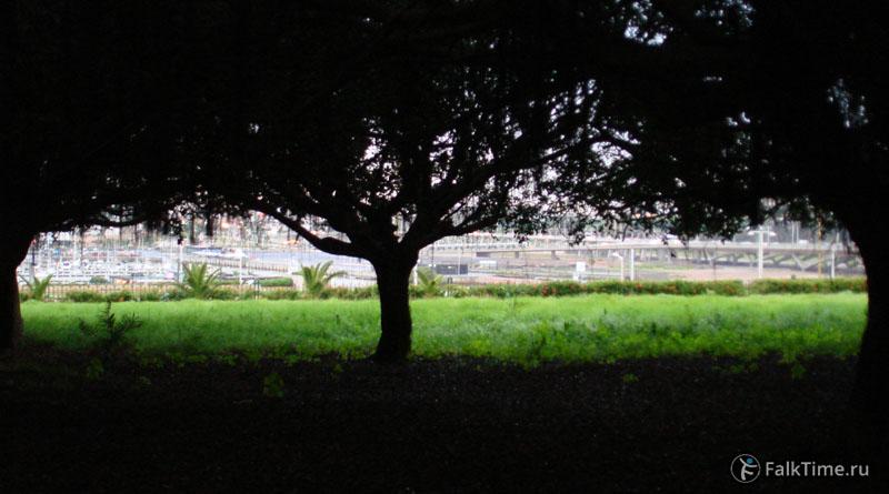 Рабат: вид из-под дерева