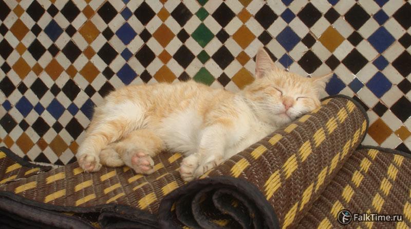 Котёнок спит