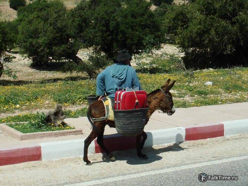 Марокканский дедушка на ослике