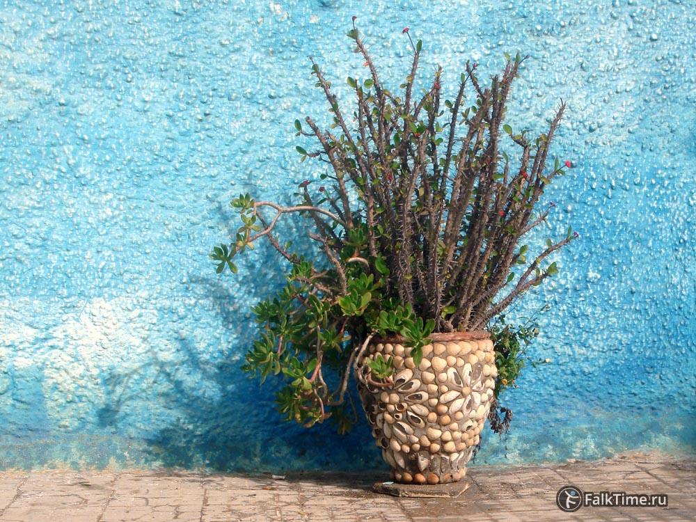 Растение в горшке у голубой стены