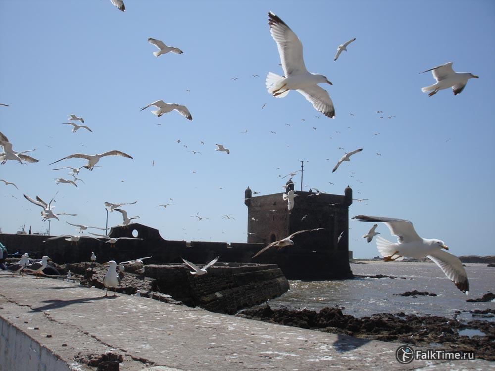 Скала дю Порт и чайки