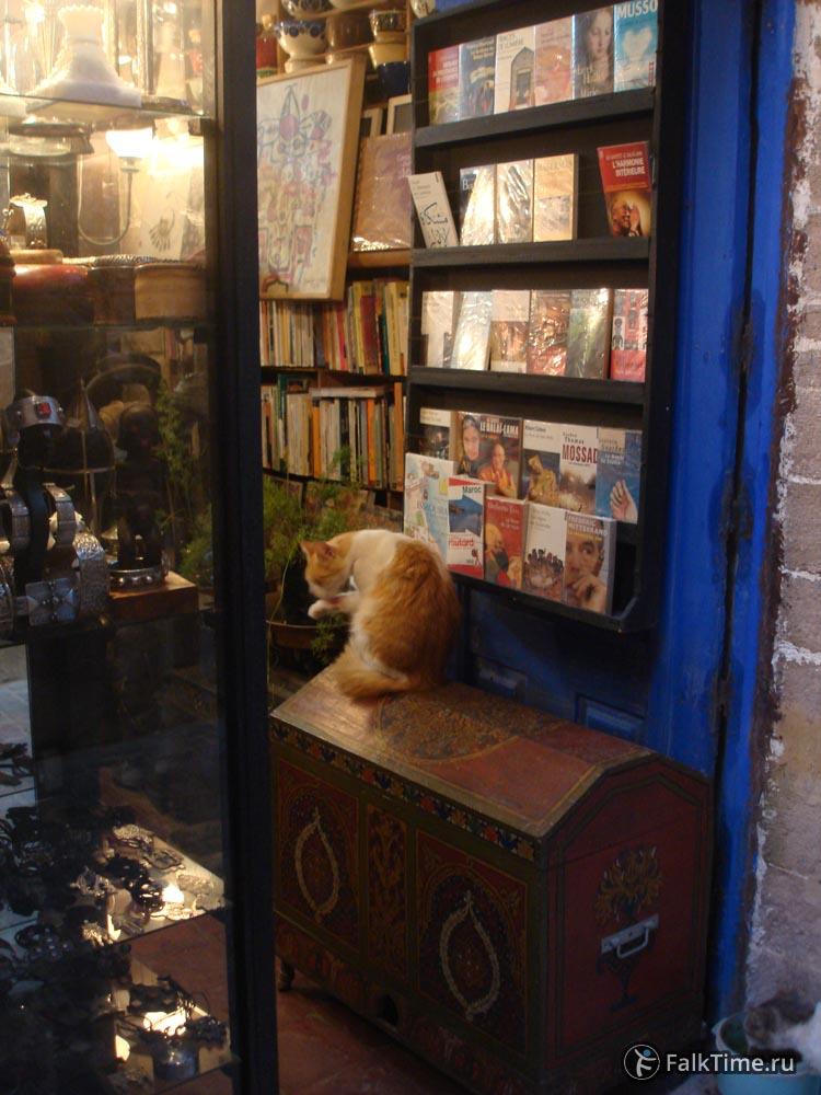 Книжный магазин с котом